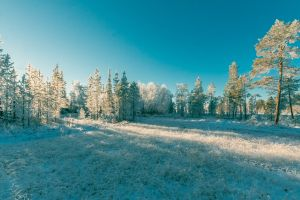 outdoorchallenge sun woods scenic frozen snow sunrays winter landscape cold forest