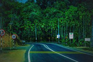 palm tree munnar road outdoor greenery road trip kerala