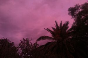 palm trees sunset trees purple south africa