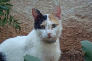 pet photography eyes animal cat