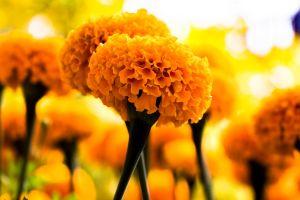petals background blooming nature flora orange growth bloom park blossom