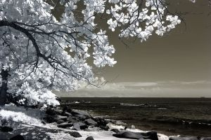 photograph rocks season landscape black and white white dramatic sky trees ocean infrared