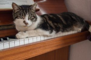 piano pet cute pretty cat