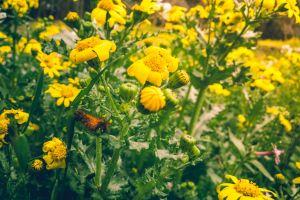 plants sunlight flowers hd wallpaper sunny yellow growth grow green close-up