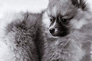 pup love black and white nature winter photo dog beautiful snow images