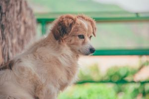puppy canine sit purebred depth of field canidae animal photography cute breed focus