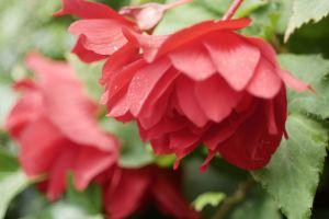 red flower red flower
