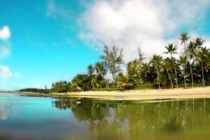 sand palm trees daytime nature water trees shore clouds coconut trees landscape