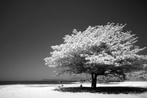 sand photograph beach grayscale ocean tree water dark sky isolated black and white