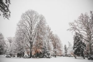 scene snowfall fog trees frosty wood ice branches scenic frost