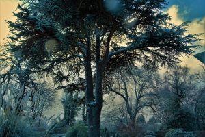 scenic fog ice frozen weather cold mist season dawn trees