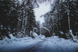 scenic tree snowy cold winter pine forest conifer frozen road
