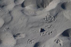 sea shell sea gull footprints sand
