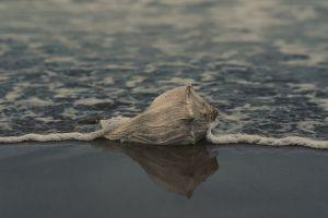 seashore water sand beach landscape shell ocean seascape reflection sea