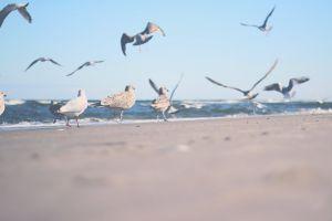seaside seashore summer water shore waves scenic flying ocean seagulls