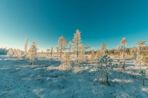season daylight nature snowy scenic weather trees snow cold winter