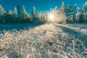 season outdoorchallenge weather snow capped trees frosty icy forest ice sun