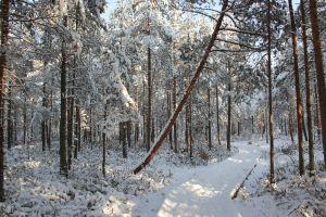 season winter landscape snow daylight frost environment frosty woods park trees
