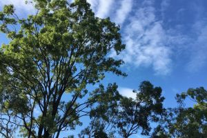 sky sunny trees blue
