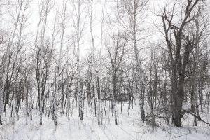sky wood weather park natural winter season ice no people path