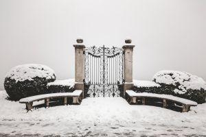 snowing snowfall white city nature winterwonderland ice winter snow