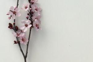 still life flowers spring flowers