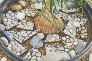 stones nature root