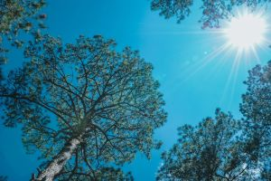 sun tall bright clear landscape daylight growth blue skies branch clear sky
