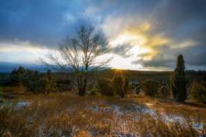 sunbeams light nature cloudy clouds scenic heathland trees sky dawn