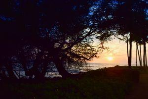 sunrise hawaii sunset ocean seashore ocean sunset orange trees scenic beach dawn