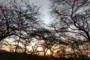 sunrise morning sun morning light nature natural