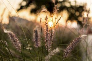 sunset sundown evergreen nature mother nature