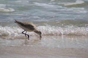 surf sea bird ocean