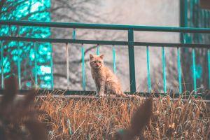 tagsforlikes pets nature animals cute animallovers animal instagramcats cats petsagram