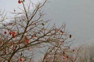 tree daytime branches daylight