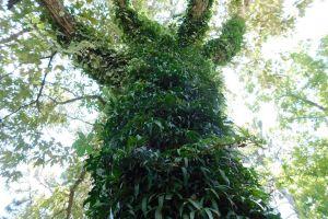 tree outdoor nature