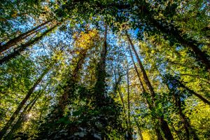 trees nature forest morning sun blue sky foliage daylight adventure