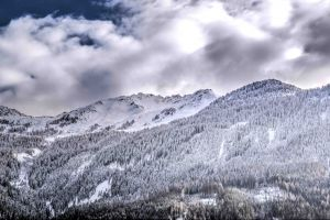 trees woods cold conifer sky mountain grayscale alpine frozen high