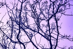twigs woods branches trees dawn nature