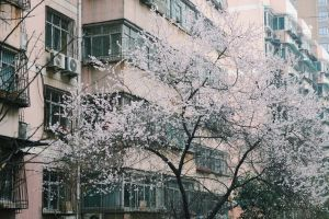 urban architecture exterior town facade tree sight wall building flowers