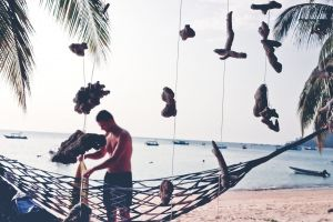 vacation hammock tropical beach