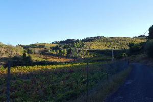 vine #mobilechallenge road nature #outdoorchallenge nature photography trail blue sky