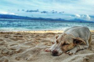water dog summer seascape outdoorchallenge vacation horizon dawn sleeping sea