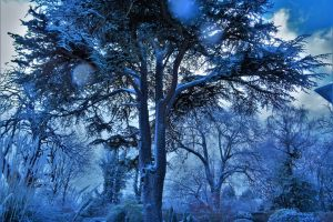 weather frosty snow low angle shot scenic snow-white winter fog light sky