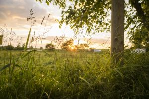 wiese field himmel feld grass sunset baum sonnenuntergang tree wolken