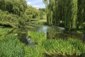 willow river stour summer