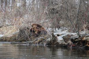 winter beaver nature photography