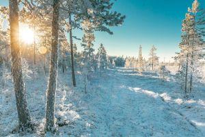 winter landscape frozen season winter freezing landscape outdoorchallenge nature cold trees