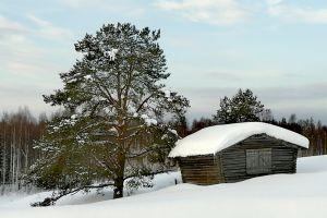 winter trees snow barn