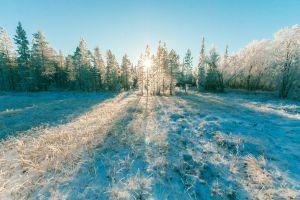 winter woods season cold scenic weather daylight nature ice trees